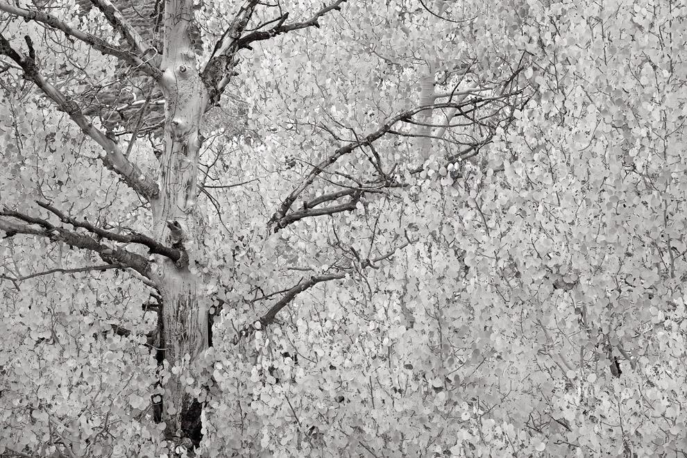Снегопад. (Фото Peter Essick):