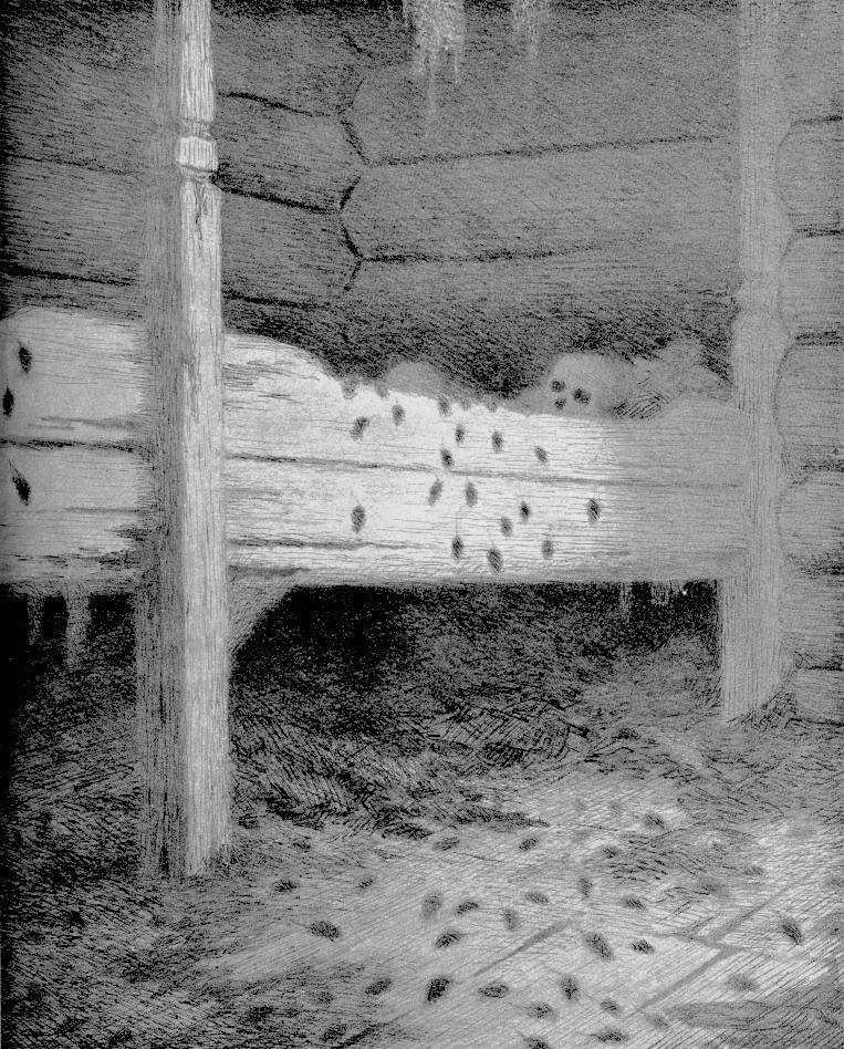 «Мышиный город», 1896.