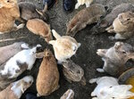 okunoshima-rabbit-island-japan-2.jpg