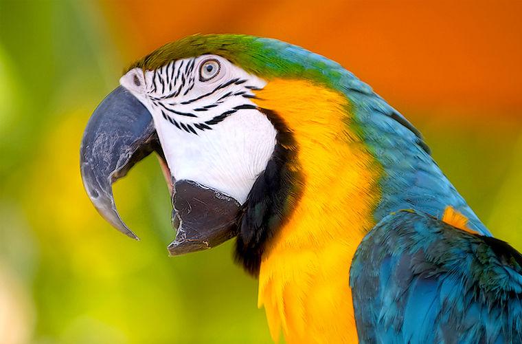 ВСибири отыскали старинного попугая