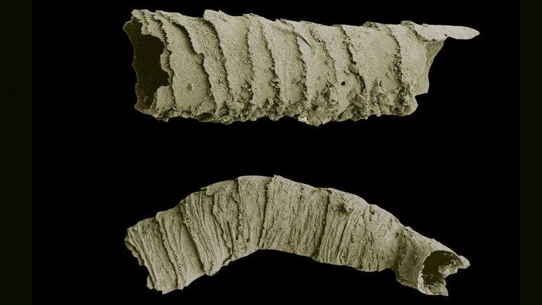 Названа причина появления первых скелетов животных