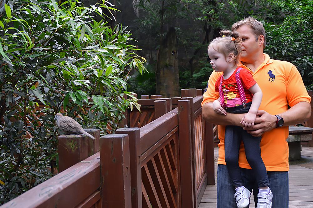 Бесплатные развлечения и достопримечательности Гонконга (для похода с ребенком 2 лет)
