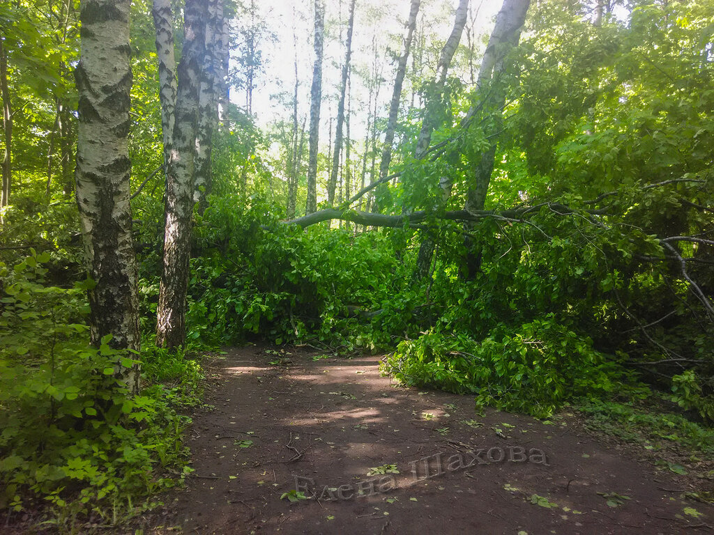Тимирязевский парк-38 copy.jpg