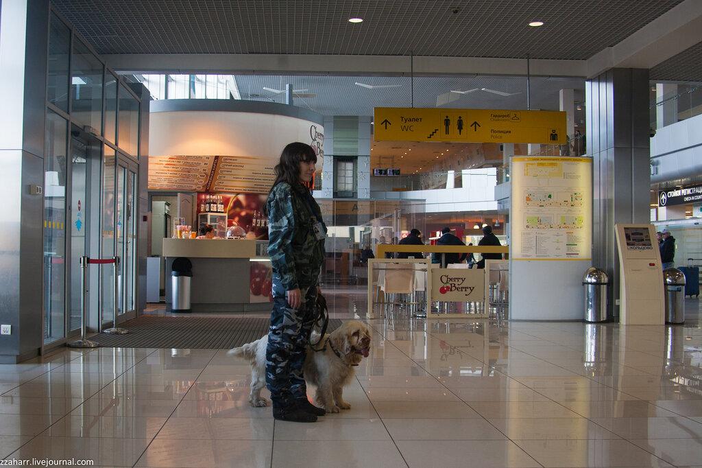 Как работает кинологическая служба аэропорта