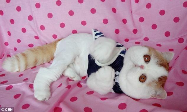 кисло-сладком какие породы кошек самые милые лягушки (которые