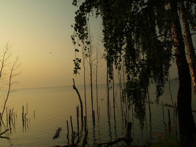 По берегам березовый лес (30.07.2013)
