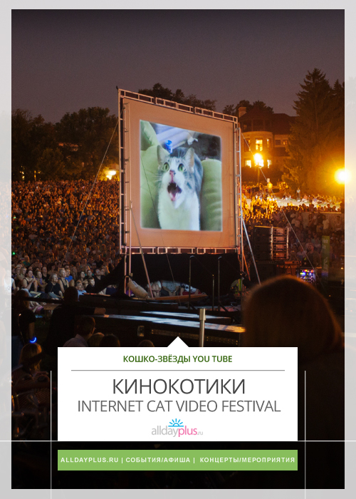 Фестиваль кошачьего видео / Internet Cat Video Festival. Лондондерри, Ирландия