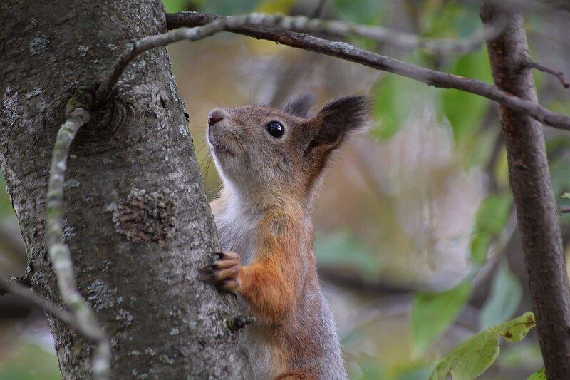 Белочка на дереве IMG_9475