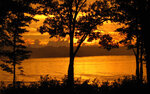 Gold nature (33).jpg