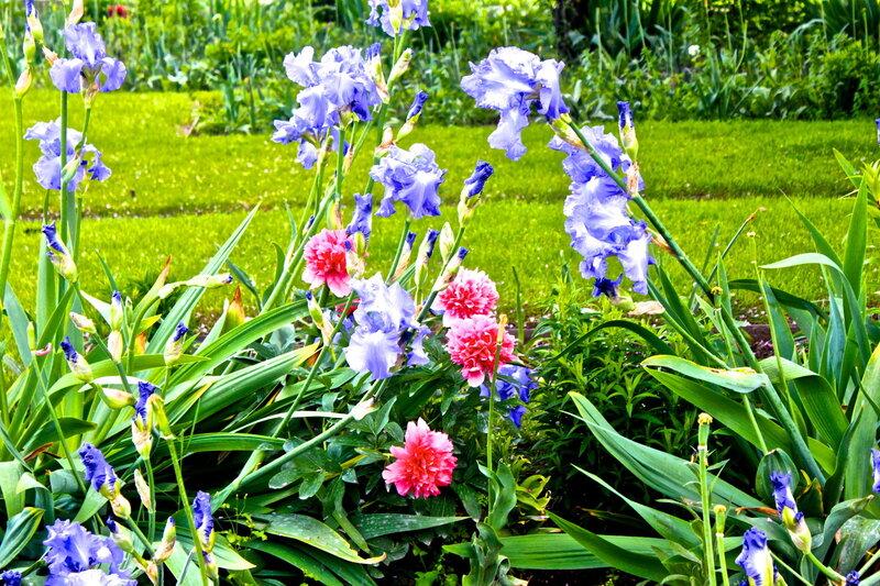 Сад Тюильри.