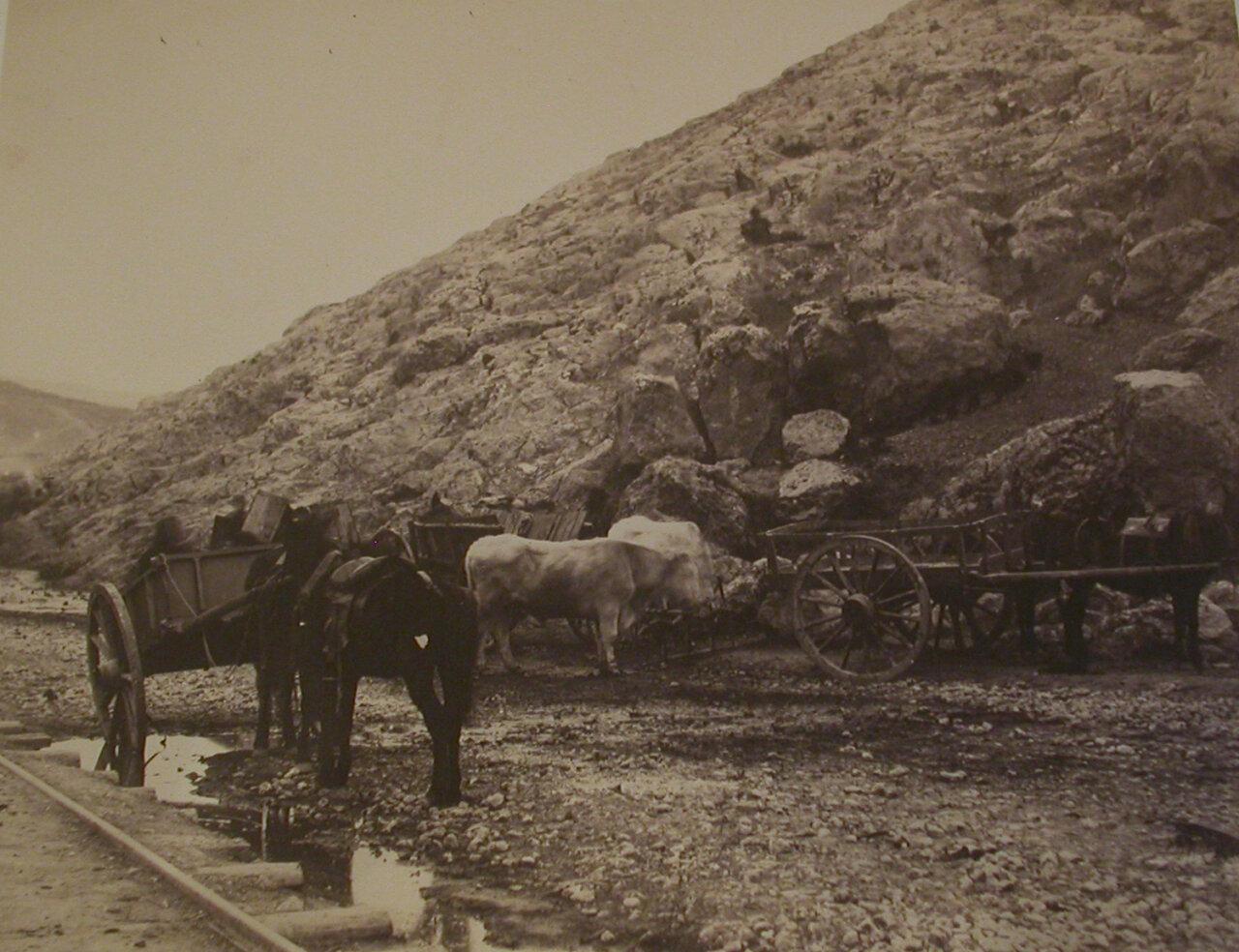 1856. Крупнорогатый скот и повозки вблизи города