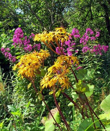Цветы в начале осени
