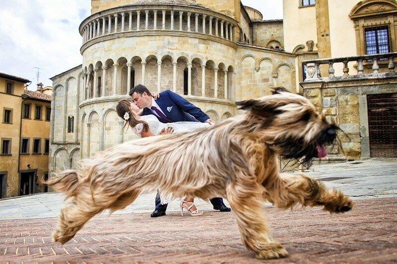 0 17af26 6d9b37 XL - Курьезные свадебные фотографии с участием животных