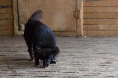 Томас Андерс и Дитер Болен собаки из приюта догпорт в добрые руки фото