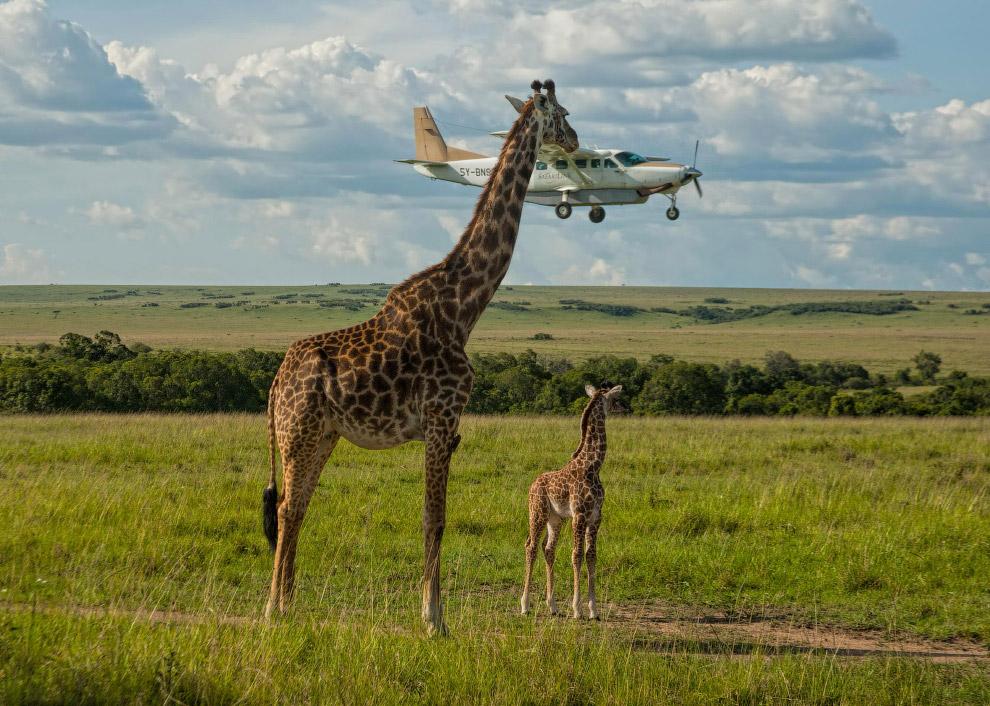 29. Мама хочет спокойствия. (Фото Melissa Nolan | Comedy Wildlife Photography Awards):