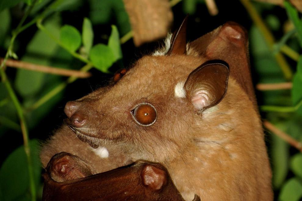 3. Айе-Айе    Айе-айе живет на Мадагаскаре и немного напоминает домашнего эльф