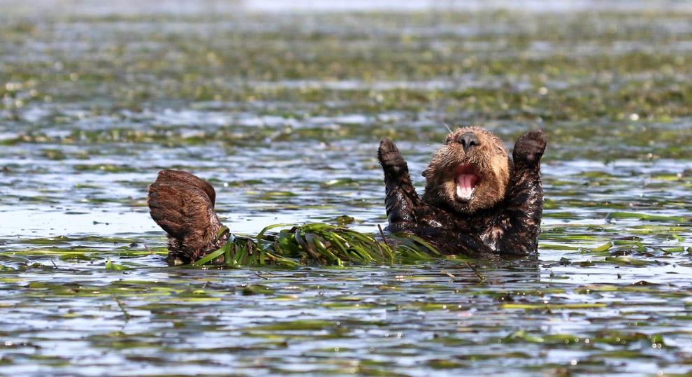 16. Смех без причины. (Фото Tina Stehr | The Comedy Wildlife Photography Awards):