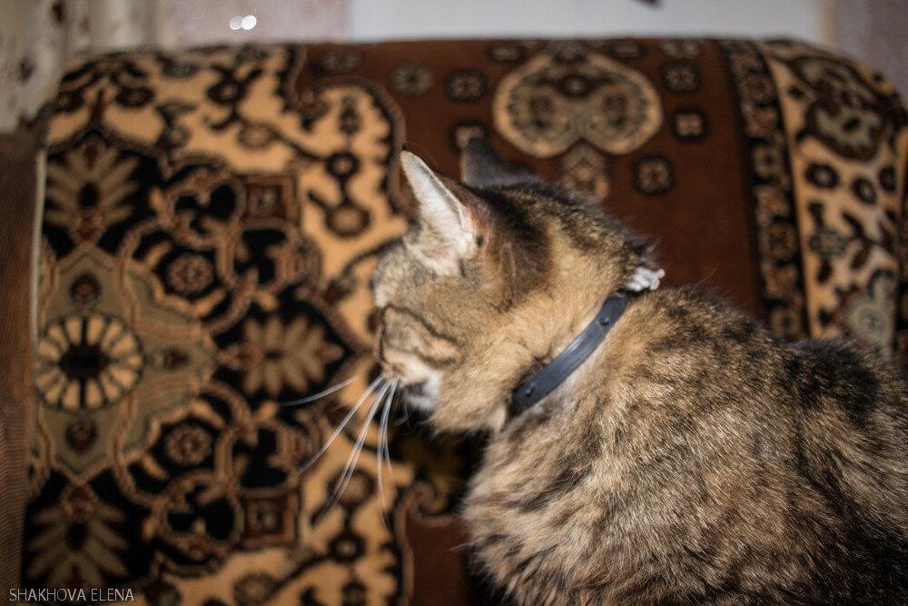 Коты Наташины-17.jpg