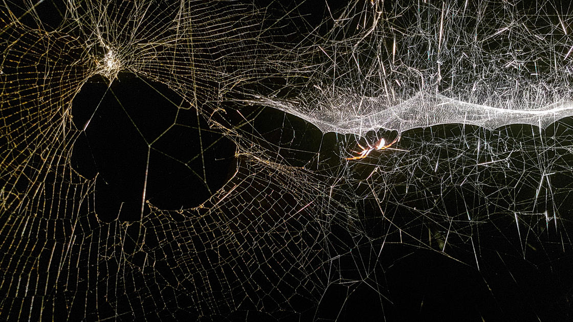 Hyperweb of the present - Tomas Saraceno (Sucriere)