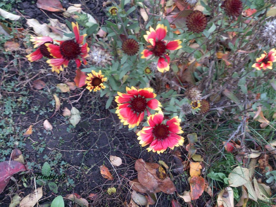 цветы-осени-52.jpg