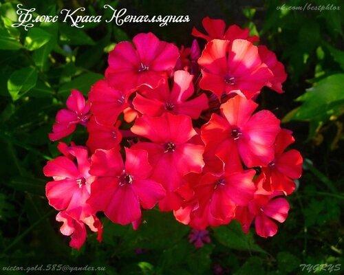 https://img-fotki.yandex.ru/get/962950/130517119.6a/0_1ad45a_98ce3a52_L.jpg