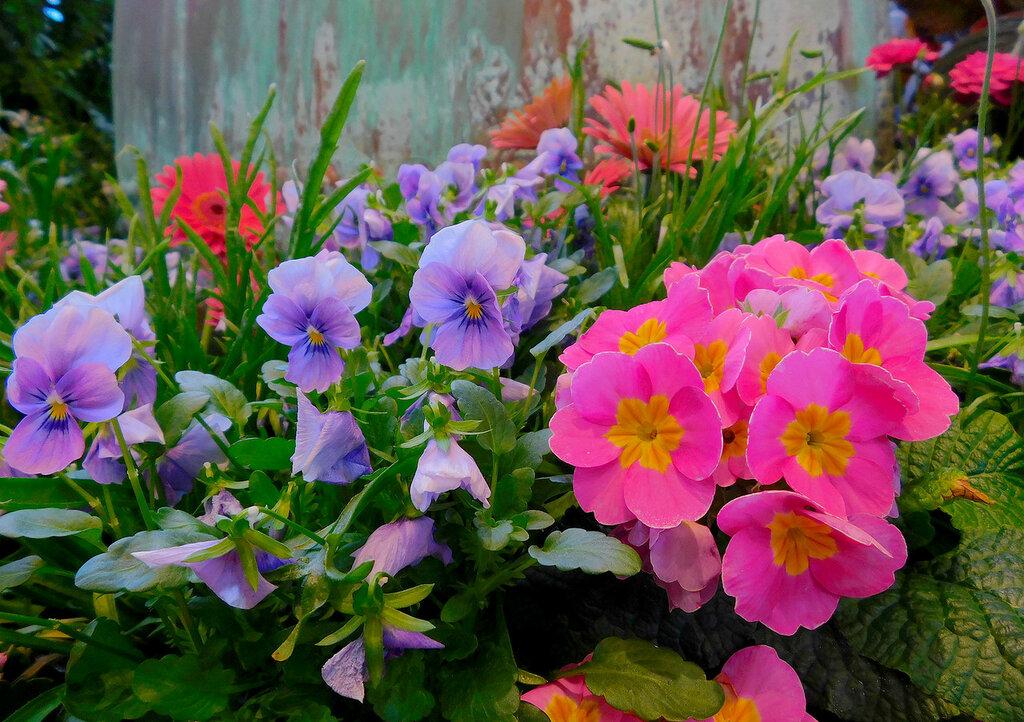Цветы на дне морском