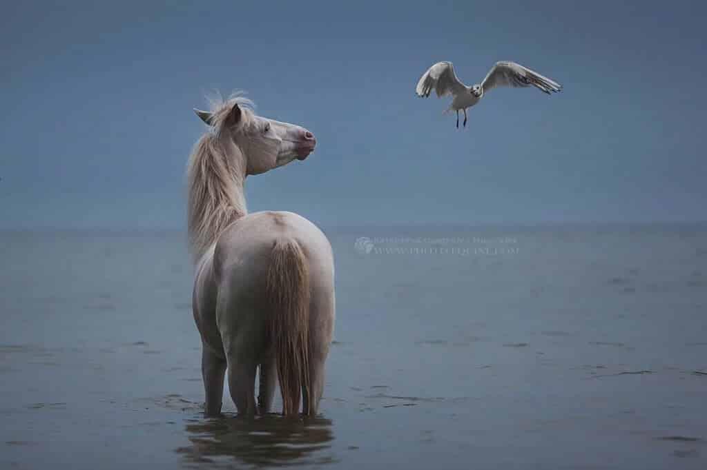 fotografij-loshadej-skachushhih-po-volnam-okeana-foto-7.jpg