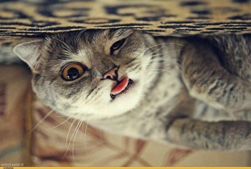 0 180246 4ee58487 XL - Фотографии внезапно уставших котов