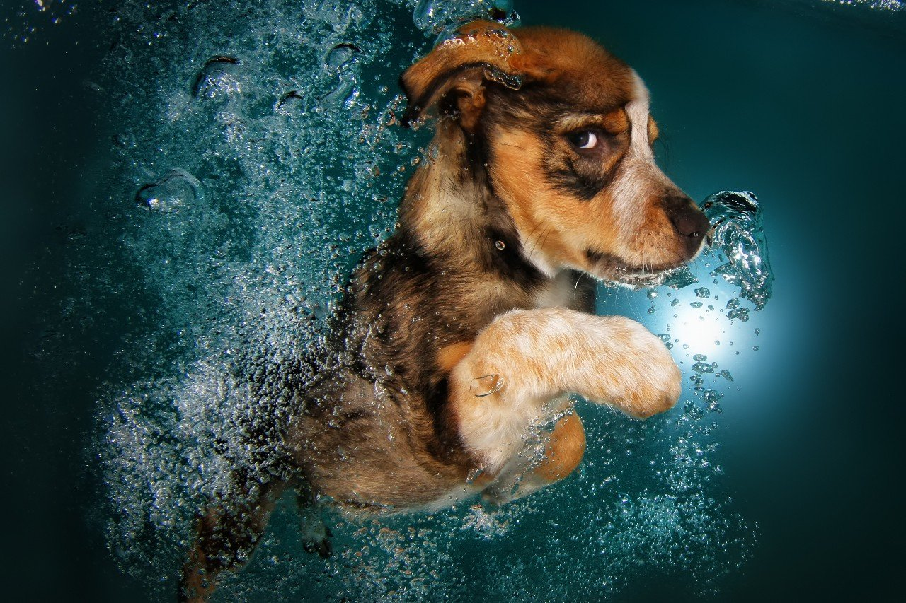 Подводные щенки в проекте фотографа Сета Кастила