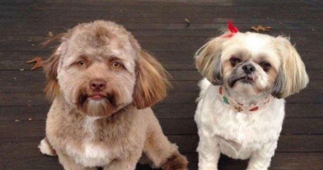 собаки лица лицо морда люди Интернет удивительное питомец