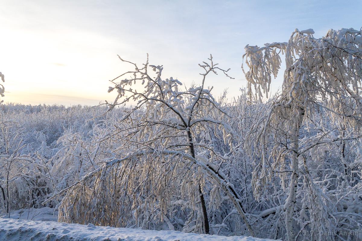 зима иней фото 1
