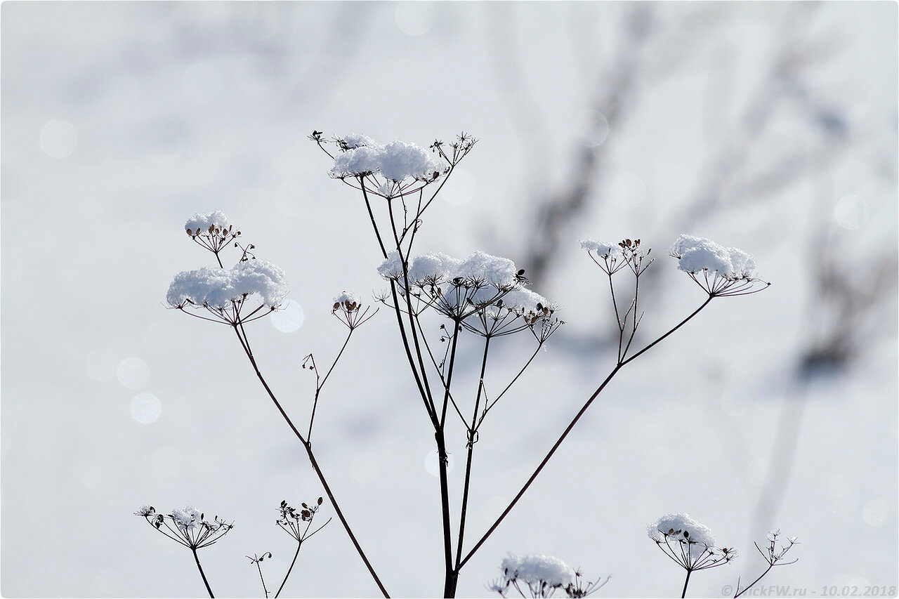 Зимние травы [© NickFW - 10.02.2018]