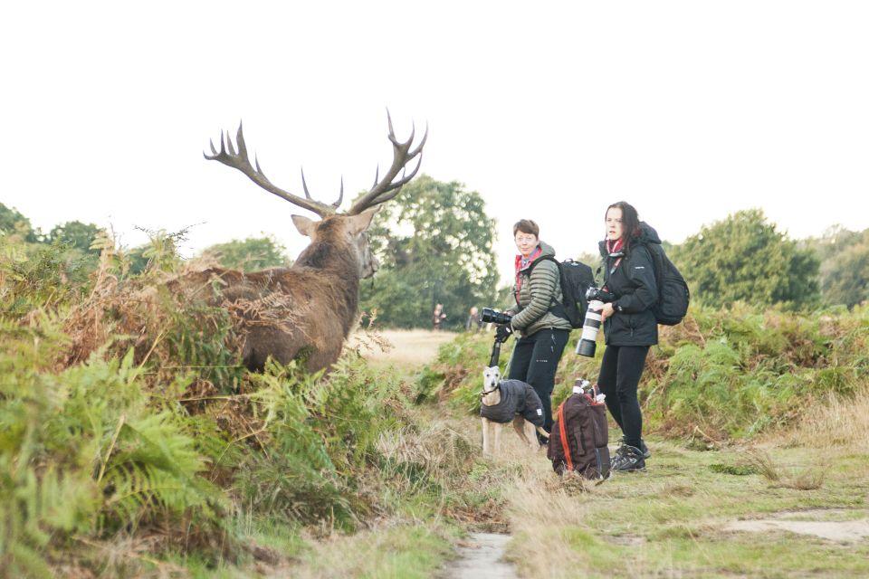 Deer Rutting Season, Richmond Park, London, UK - 09 Oct 2016