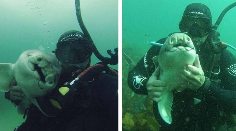 Акула приплывает, чтобы пообниматься с дайвером в течении 7 лет