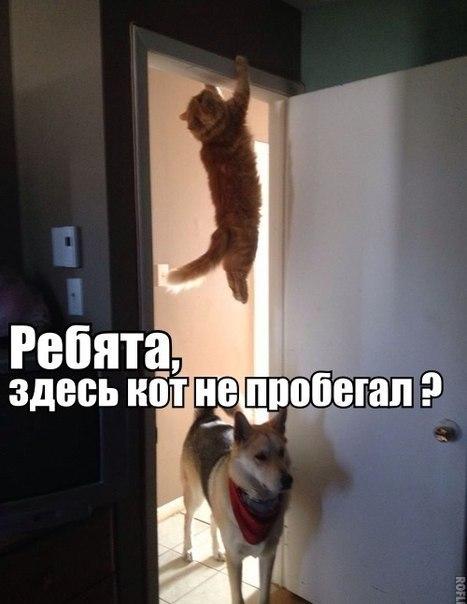 кошки-ха-ха-2.jpg