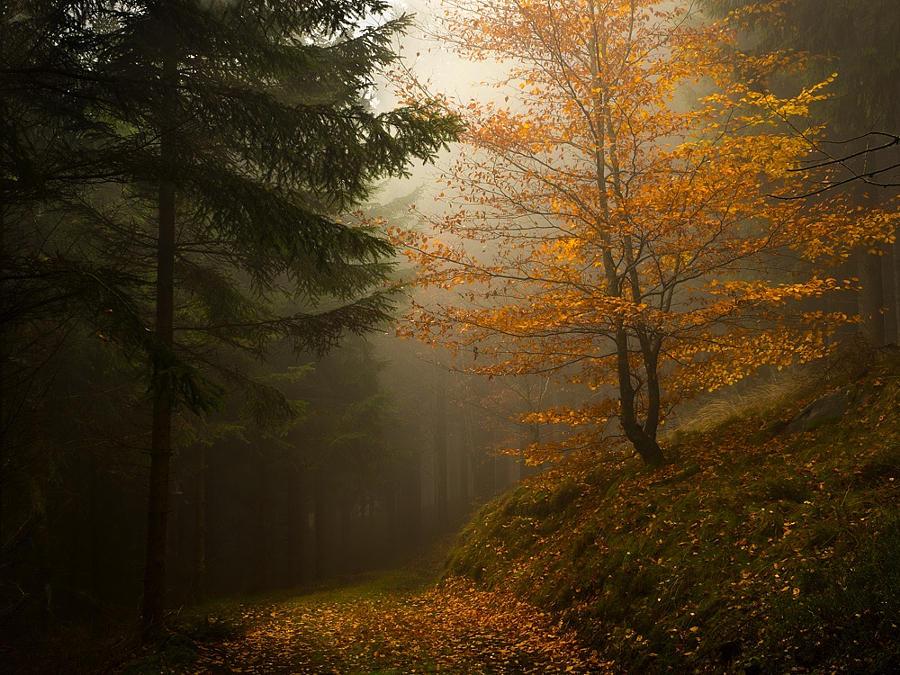 18.Туманный день в лесу.