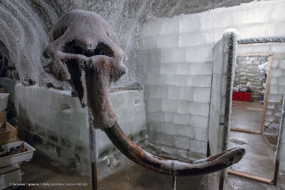 5. Это музей мамонта в Хатанге: