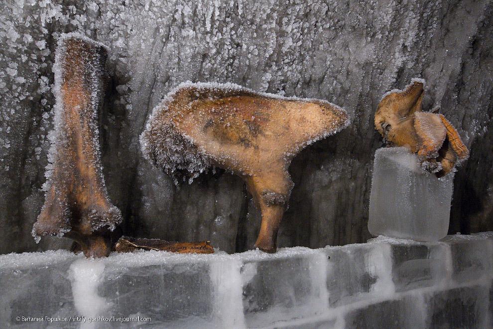 8. Основным экспонатом этого музея мамонта в Хатанге стал тот самый мамонт, найденный оленеводо