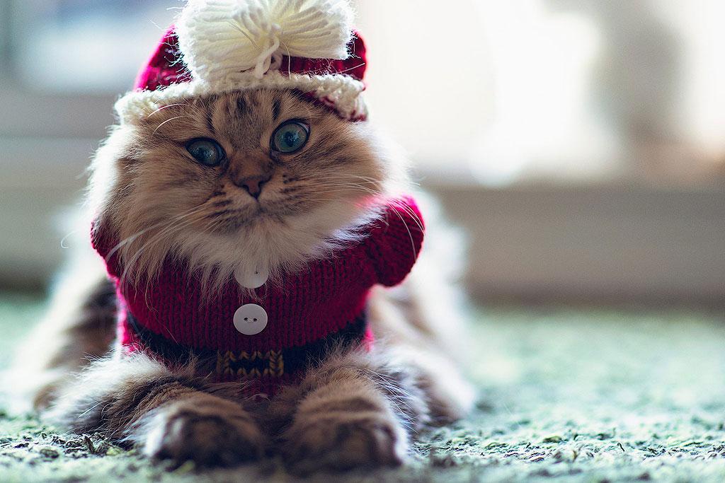 25. Кошке не надо покупать наряды, она всегда красива и без одежды.