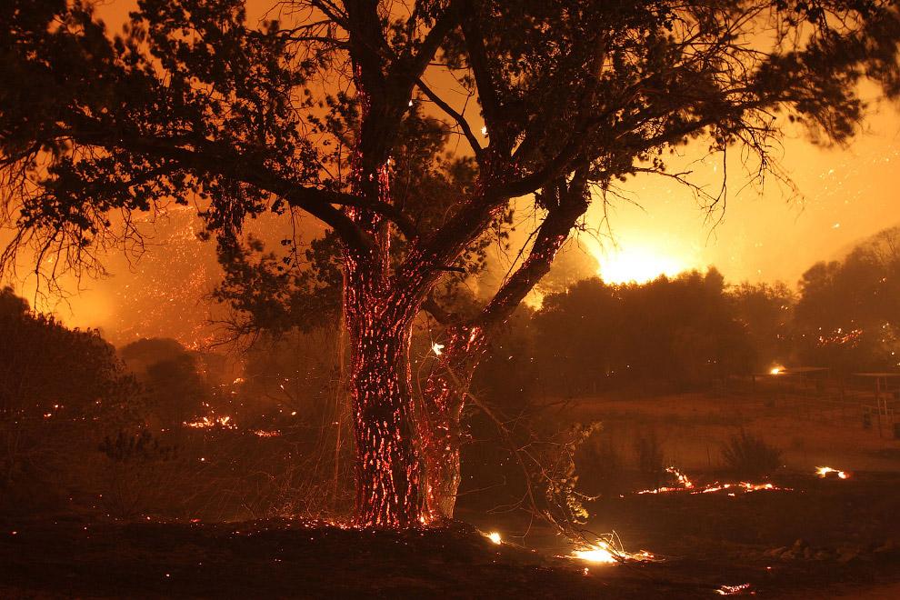 13. Горящая Калифорния, 15 ноября 2008. (Фото David McNew):