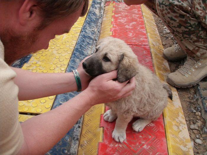 У них впервые появился дом: собаки из приюта в первый день с новыми хозяевами