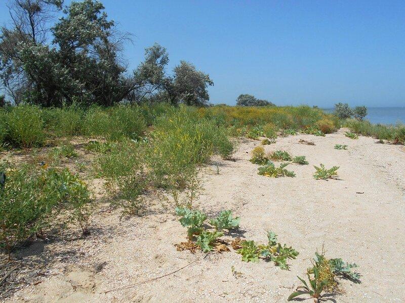 Песок и Солнце - день чудесный ... DSCN6336.JPG
