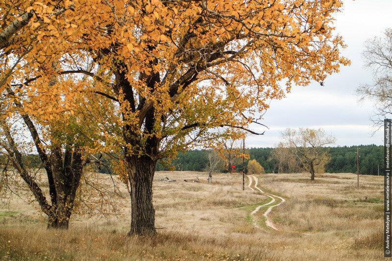 желтые листья деревьев и дорога