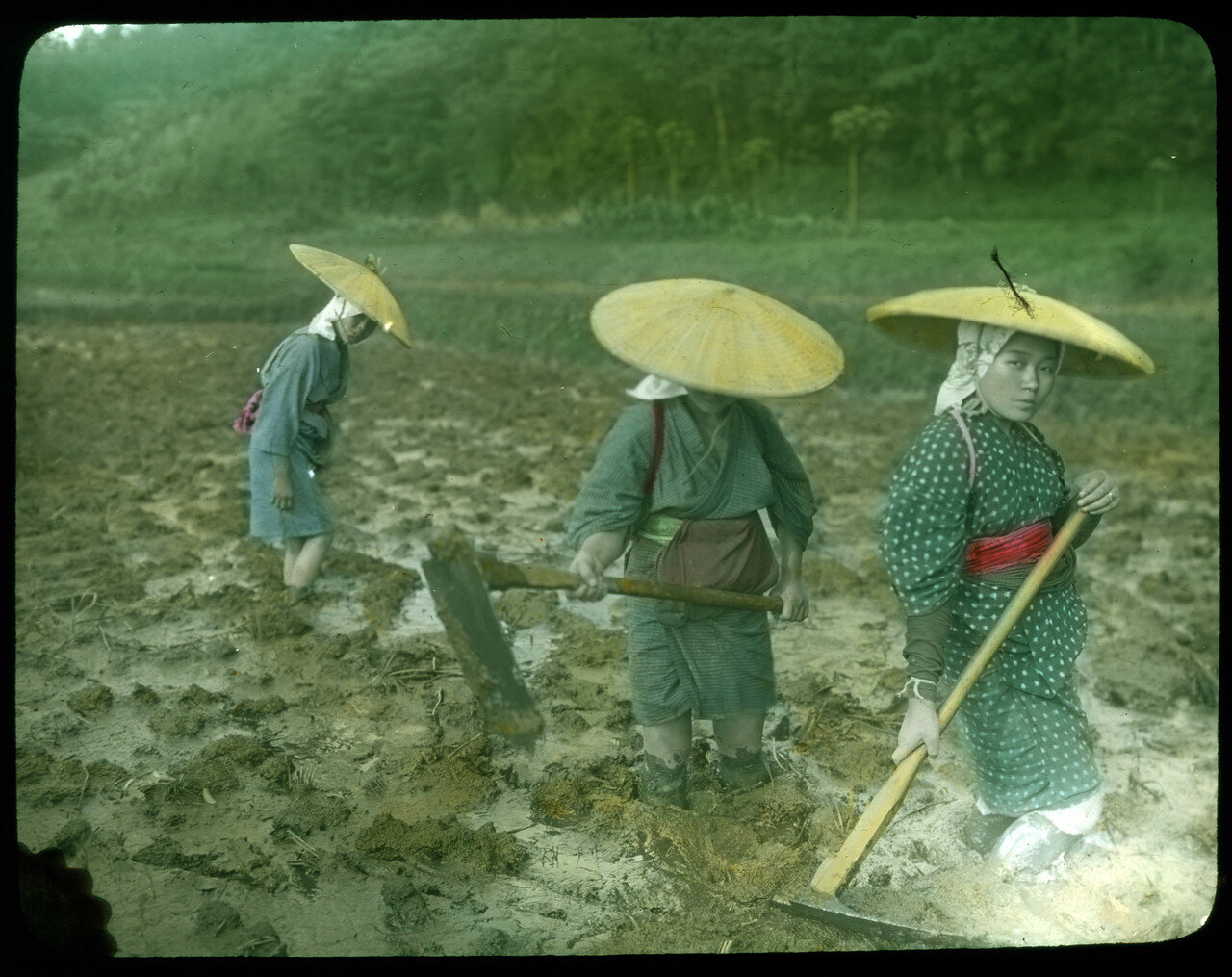 Женщины подготавливают рисовое поле