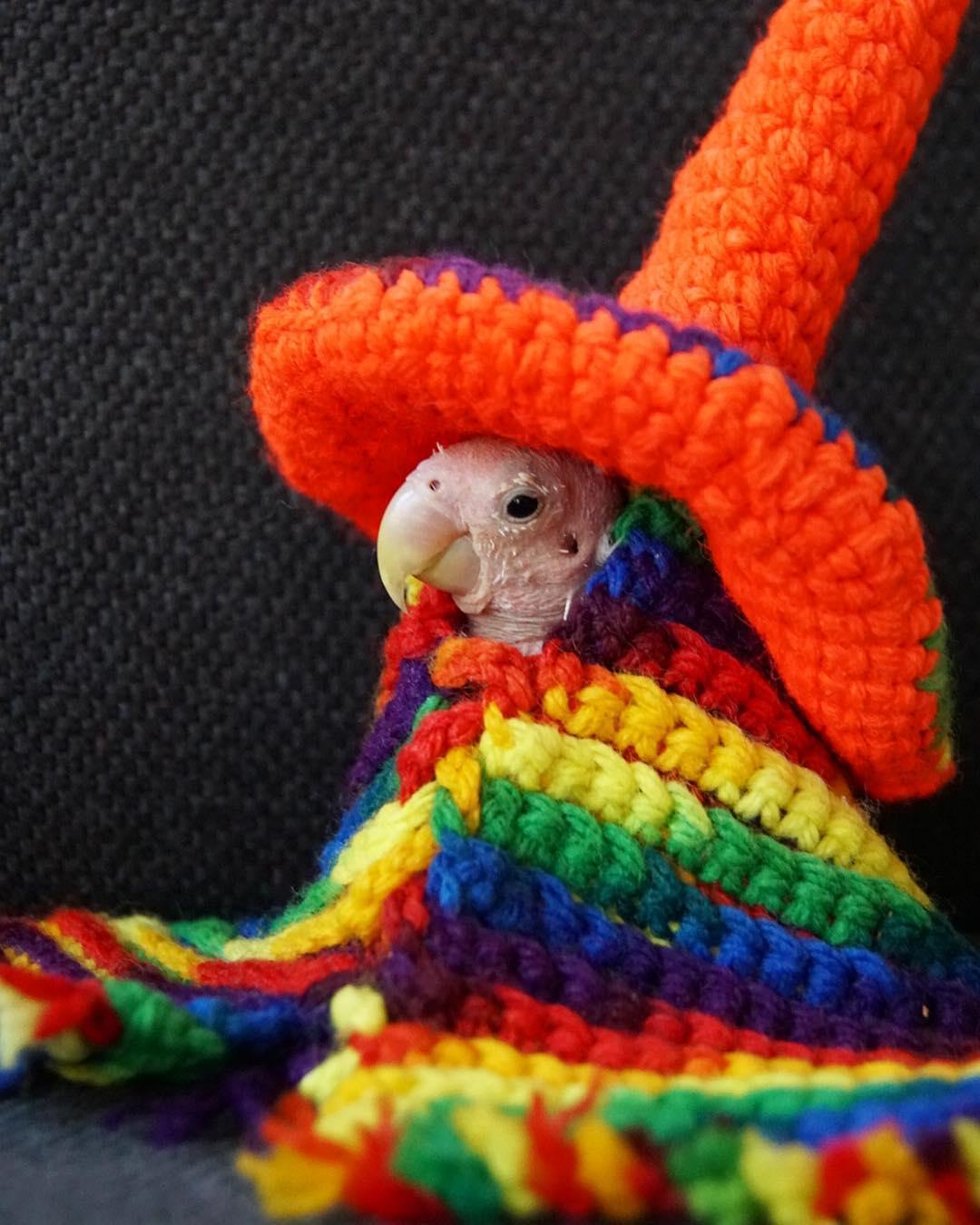 Лысому попугаю поклонники шлют вязаную одежду, в которой он позирует в Instagram