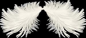 перья белесые