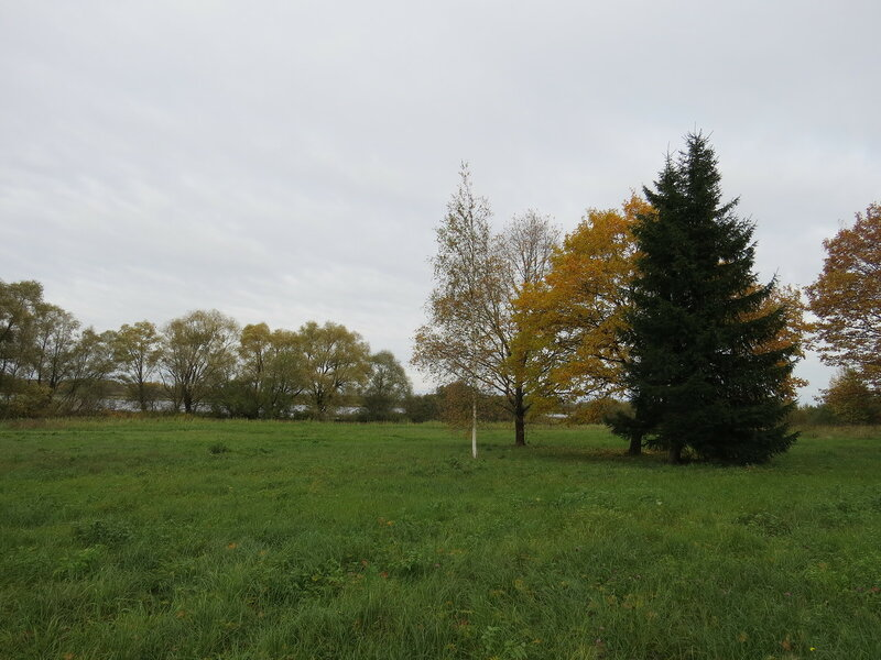 Осенняя поляна в Витославлицах