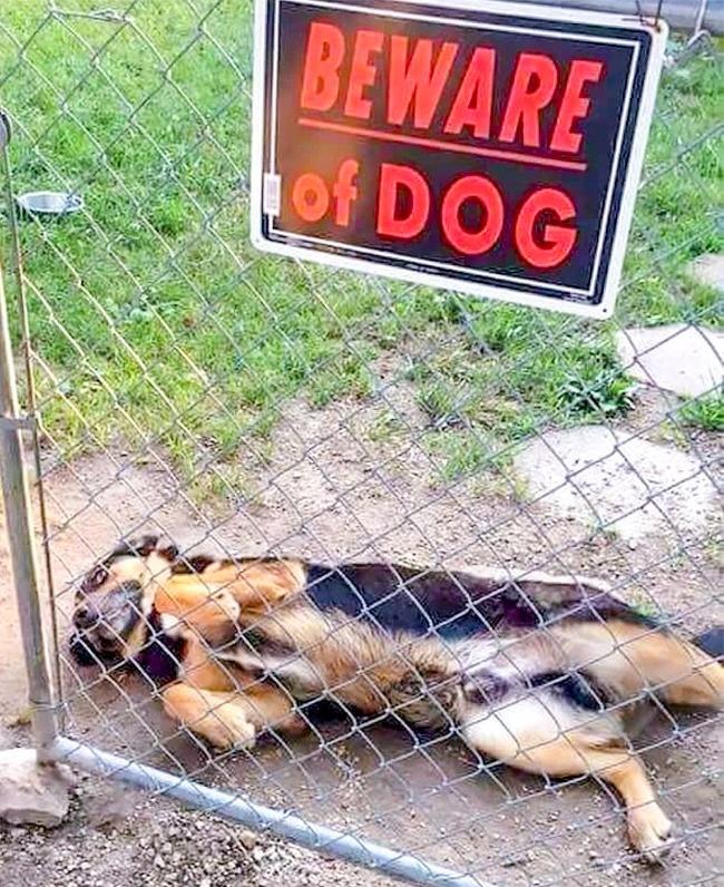 кошки и собаки друзья собаки Фотография фотограф фотоподборка человек мимими Ми-ми-ми