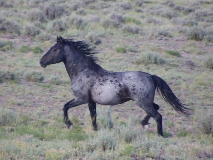 красивые фото живые фото лошади животные существо существа красиво Красота