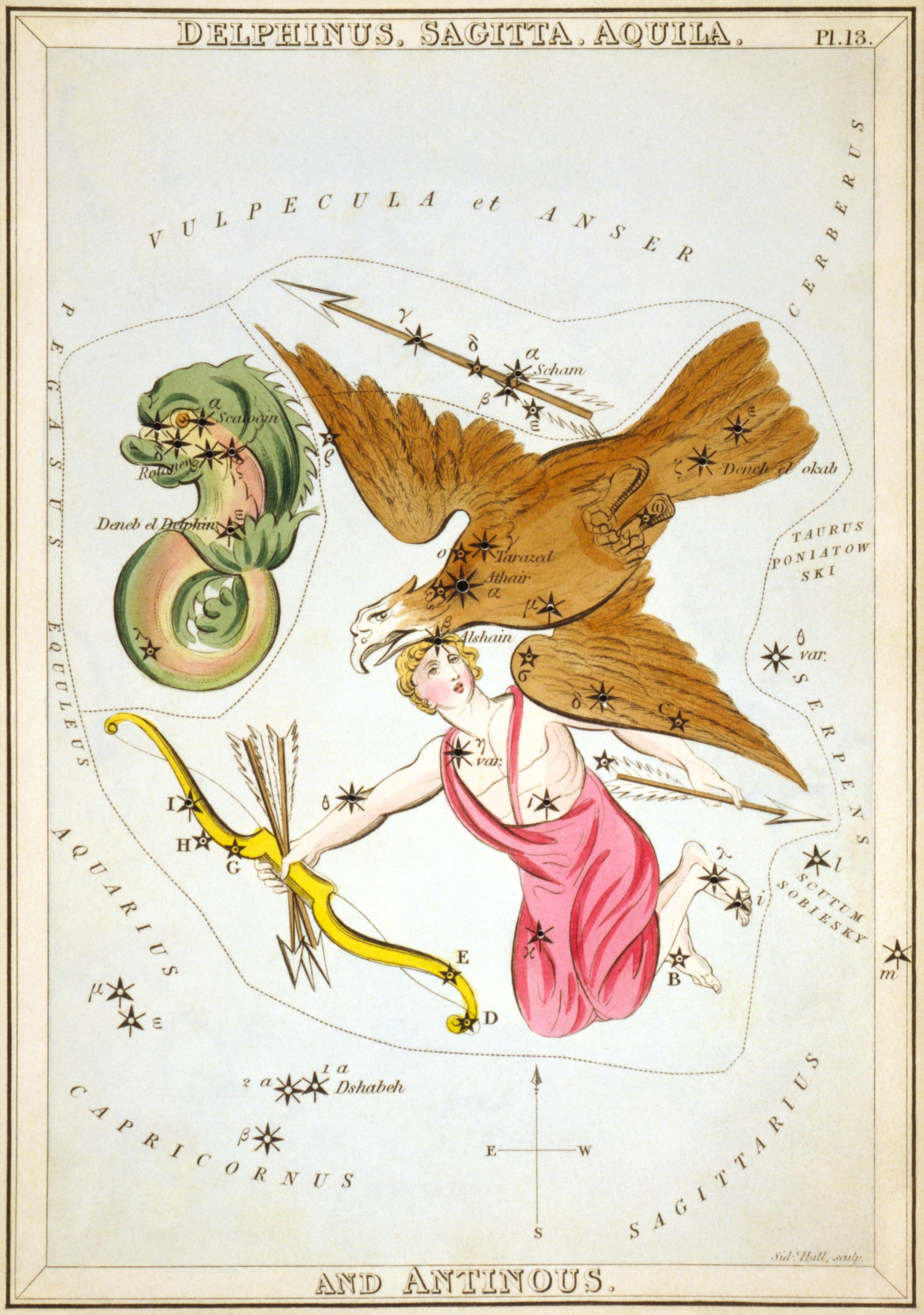 Карточка № 13: Дельфин, Стрела, Орёл, и Антиной